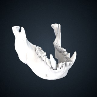 3d model of Nasalis larvatus: Mandible