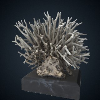 3d model of Seriatopora hystrix