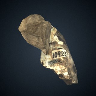 3d model of Ontocetus oxymycterus Kellogg: Tooth