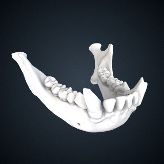 3d model of Hylobates muelleri funereus: Mandible