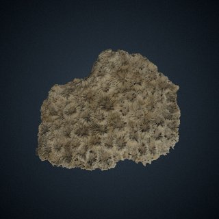 3d model of Diploastrea heliopora