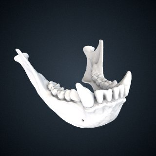 3d model of Hylobates lar carpenteri: Mandible