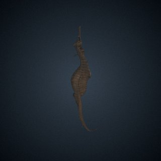 3d model of Phyllopteryx taeniolatus