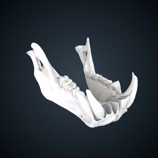 3d model of Mandrillus sphinx: Mandible