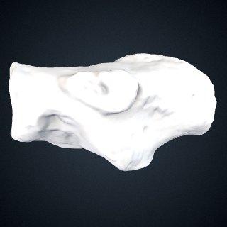 3d model of Pan troglodytes: Calcaneus Right