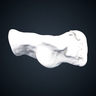 3d model of Pongo pygmaeus: Calcaneus Right