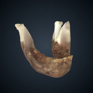 3d model of Drimolen mandible: mandible