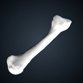 3d model of Pan troglodytes troglodytes: MT5 Left