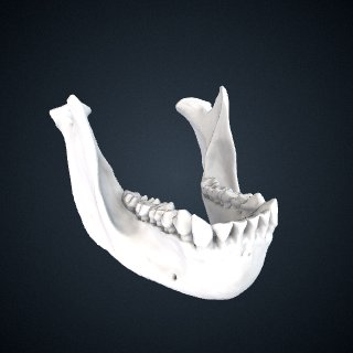 3d model of Gorilla gorilla diehli: Mandible