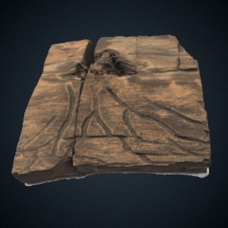 3d model of Paleoscolytus divergus Walker