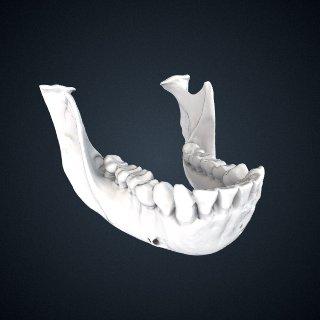 3d model of Pongo pygmaeus: mandible