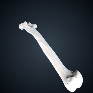 3d model of Pan troglodytes: Humerus Right