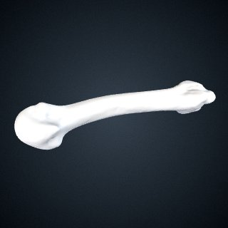 3d model of Pan troglodytes verus: MT2 Left
