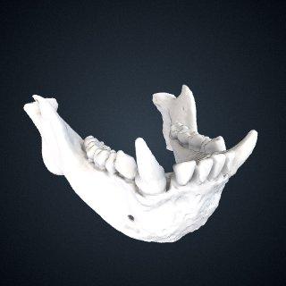 3d model of Hylobates pileatus: Mandible
