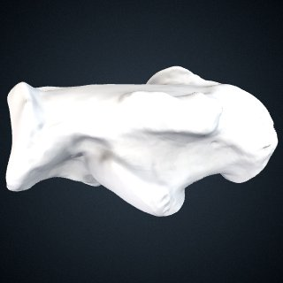 3d model of Pan troglodytes troglodytes: Calcaneus Right