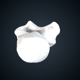3d model of Pongo abelii: Talus Right