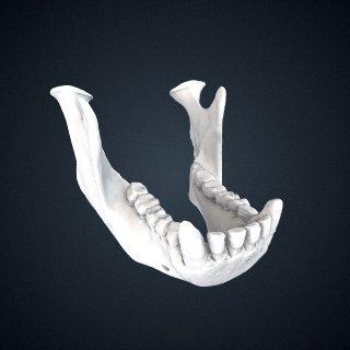 3d model of Pongo abelii: mandible