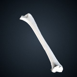 3d model of Pan troglodytes troglodytes: Humerus Left