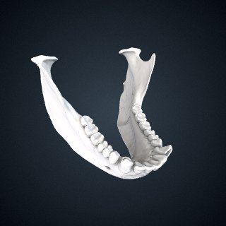 3d model of Ateles fusciceps rufiventris: Mandible
