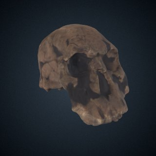 3d model of Homo rudolfensis: cranium