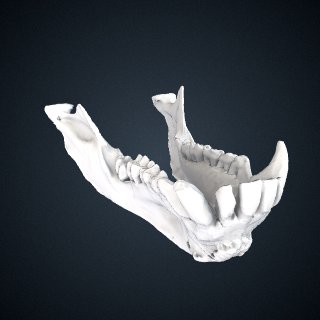 3d model of Papio hamadryas: Mandible