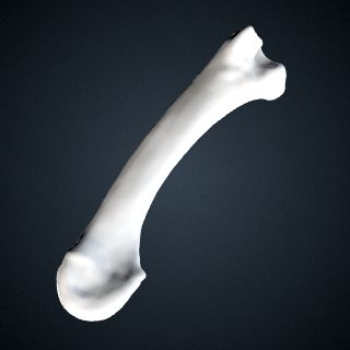 3d model of Pan troglodytes verus: MT3 Left