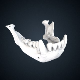 3d model of Hylobates lar lar: Mandible