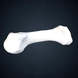 3d model of Pan troglodytes verus: MT1 Right