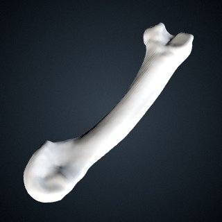 3d model of Pan troglodytes verus: MT3 Right
