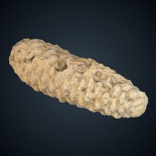 3d model of Pinus premurrayana Knowlton