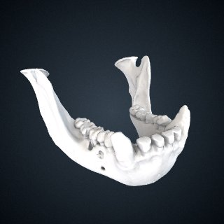 3d model of Pan troglodytes verus: Mandible