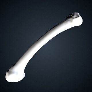 3d model of Pongo abelii: MT5 Right
