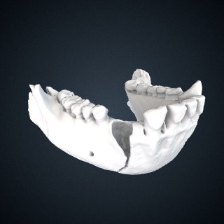 3d model of Pan troglodytes troglodytes: Mandible
