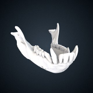 3d model of Macaca sinica: Mandible