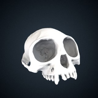 3d model of Presbytis rubicunda carimatae