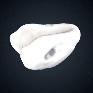 3d model of Pongo abelii: Lunate Right