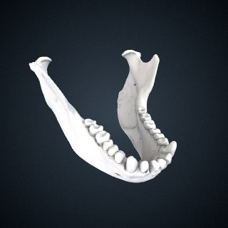 3d model of Ateles geoffroyi ornatus: Mandible
