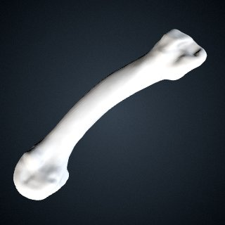 3d model of Pan troglodytes troglodytes: MT2 Left