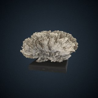 3d model of Millepora alcicornis