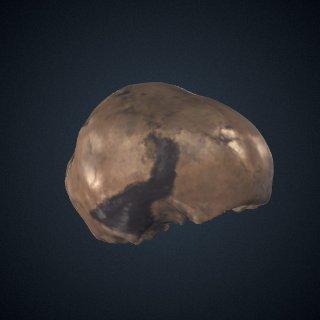 3d model of Homo neanderthalensis: cranium