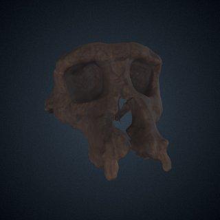 3d model of Sahelanthropus tchadensis: cranium