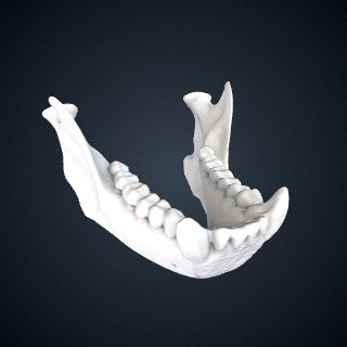 3d model of Sapajus libidinosus libidinosus: Mandible