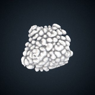 3d model of Montipora danae: Detail View