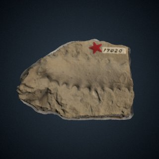 3d model of Chimaerotheca montanana Brown