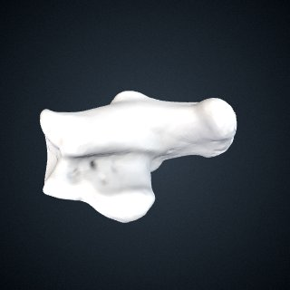3d model of Pan troglodytes troglodytes: Calcaneus Left