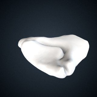 3d model of Pongo abelii: Scaphoid Centrale Right