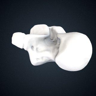 3d model of Pan troglodytes troglodytes: Talus Left