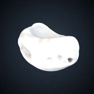 3d model of Pongo pygmaeus: Navicular Right