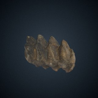 3d model of Mammut americanum (Kerr)