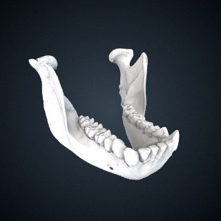 3d model of Gorilla gorilla gorilla: Mandible